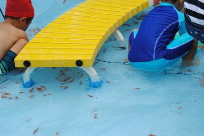プール開き(金魚すくい)