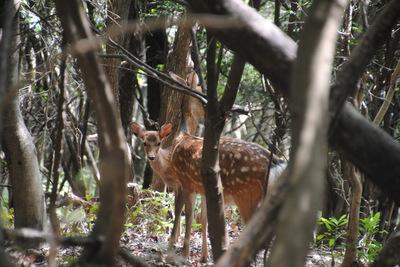 自然観察の森(年長)