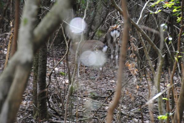 自然観察の森サムネイル