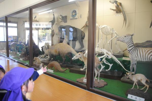 動物園サムネイル