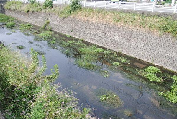 川掃除サムネイル
